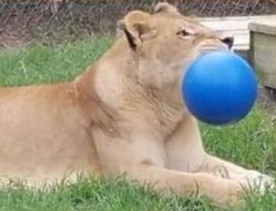 12 blue ball
