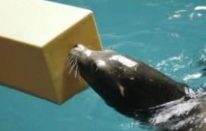seal with box