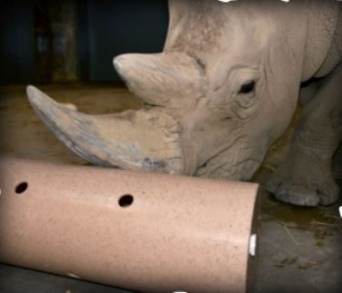 rhino with tube