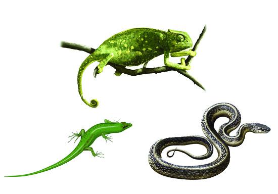 Reptiles/Aquatics