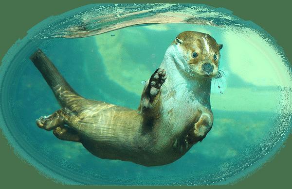 zoos and aquarium