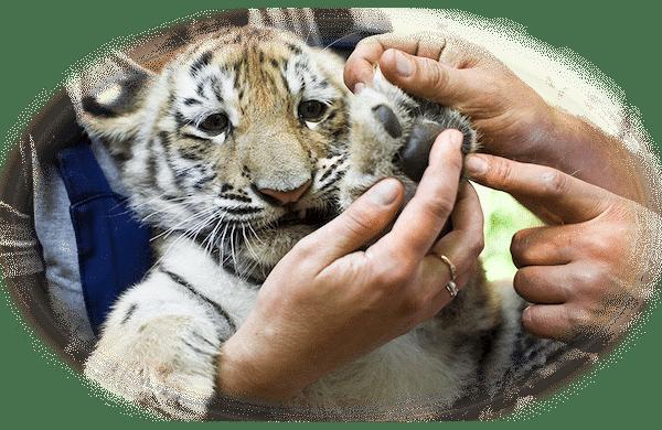 sanctuaries, humane societies, and veterinary clinics
