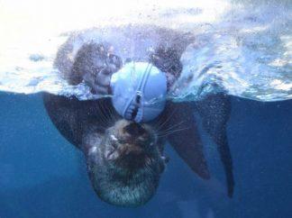 Seals/Otters